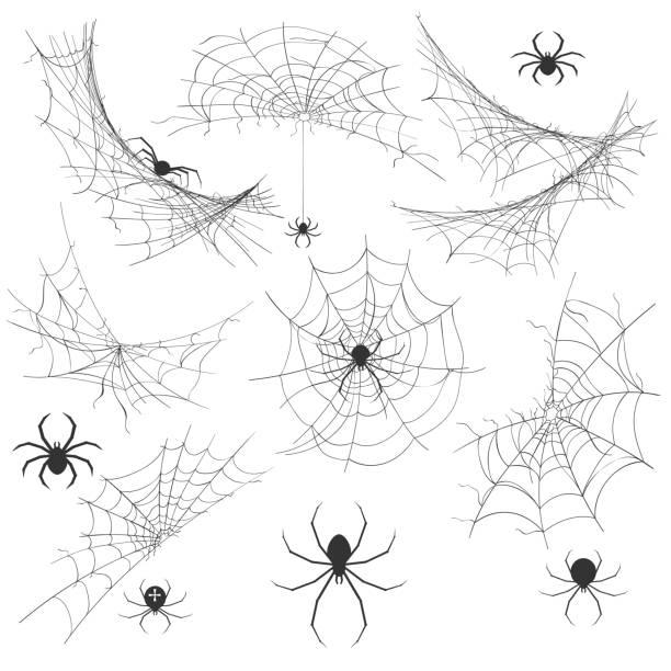 spider with cobweb - tarantula stock illustrations