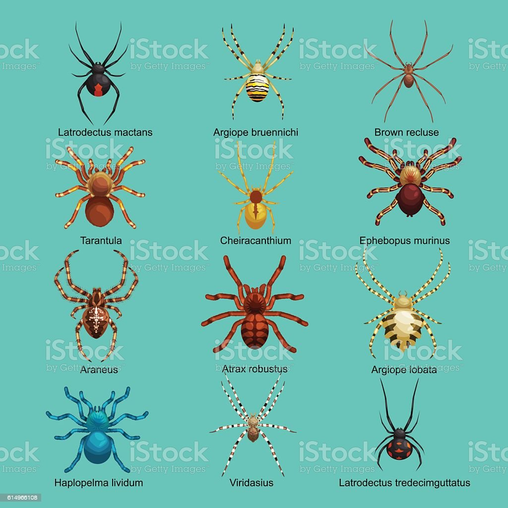 spiders cartoon set dangerous insects collection stock vector art