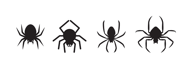 Spiders for decoration and covering on the background.