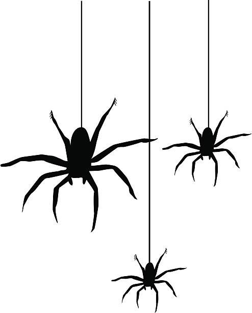 spiders - heather mcgrath stock illustrations