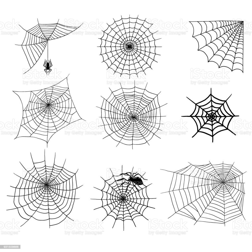 Spiders vector web silhouette spooky spider nature halloween element cobweb decoration fear spooky net vector art illustration