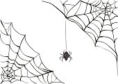 Spiderweb. Big black spider web. Black scary spider. Poison spider