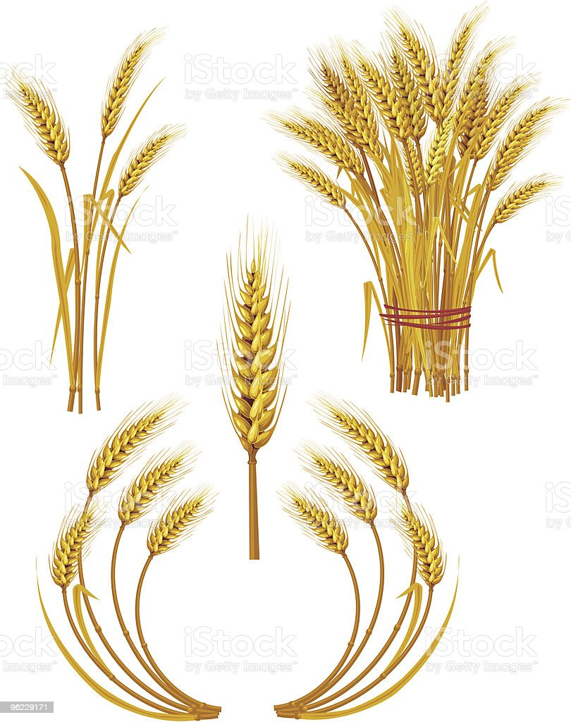 Spike of golden wheat royalty-free stock vector art