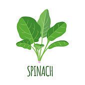istock Spinach icon in flat style isolated on white. 1009581642