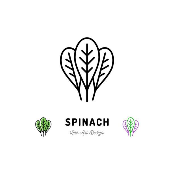 illustrations, cliparts, dessins animés et icônes de icône aux épices légumes feuilles d'épinards. fine art desig - antioxydant