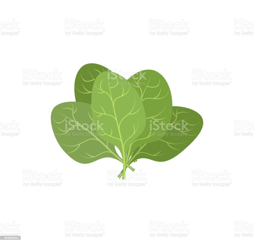 Spinach leaves on a white background. bunch of green plants vector art illustration