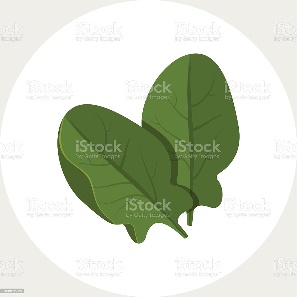 Spinach vector art illustration