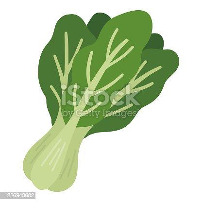 spinach  vegetable green illustration