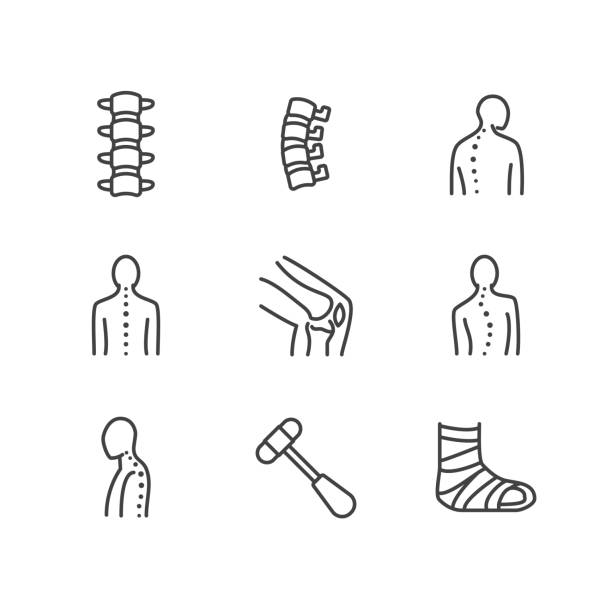 Spine, backbone line icons. Orthopedics clinic, medical rehab, back trauma, broken bone, posture correction, scoliosis. Health care thin linear hospital signs. Pixel perfect 64x64 Editable Strokes Spine, backbone line icons. Orthopedics clinic, medical rehab, back trauma, broken bone, posture correction, scoliosis. Health care thin linear hospital signs. Pixel perfect 64x64. Editable Strokes physical therapy stock illustrations