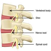 istock spine disc and vertebral body anatomy medical vector illustration on white background 1151539389