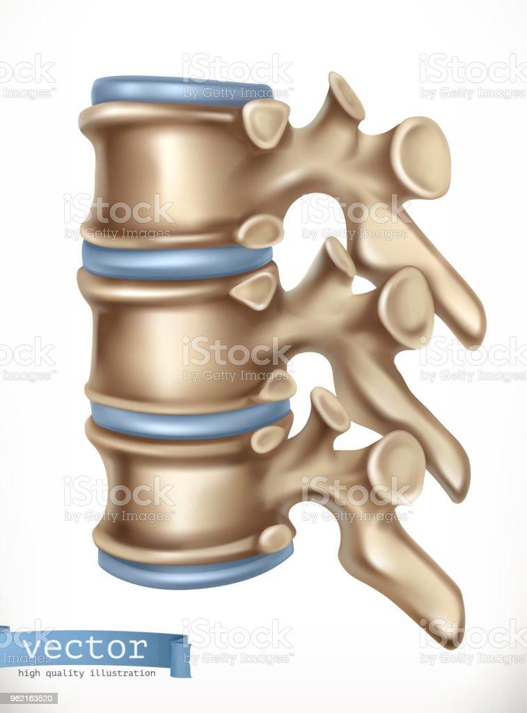Struktur Der Wirbelsäule Menschliches Skelett Medizin 3d Vektor Icon ...