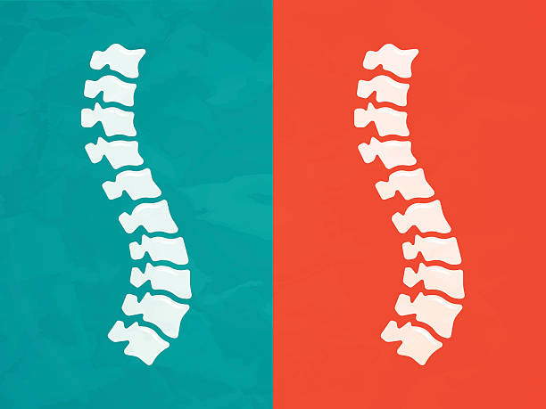 Spine Human spine chiropractic back pain concept. EPS 10 file. Transparency effects used on highlight elements. backache stock illustrations