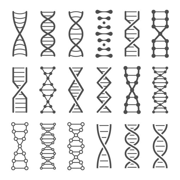 DNA spiral icon. Human genetics code, genom model and bio laboratory string spirals vector icons set DNA spiral icon. Human genetics code, genom model and bio laboratory string spirals. Genetic code helix, biochemistry dna molecular alterations. Vector isolated icons set chromosome stock illustrations