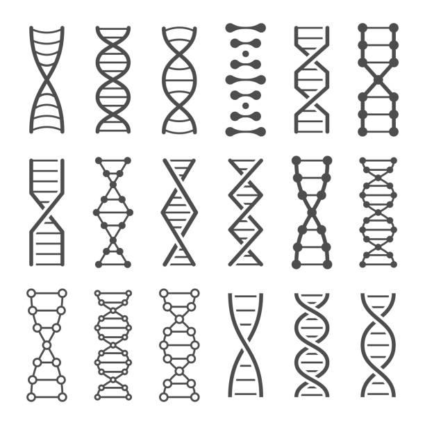 DNA spiral icon. Human genetics code, genom model and bio laboratory string spirals vector icons set DNA spiral icon. Human genetics code, genom model and bio laboratory string spirals. Genetic code helix, biochemistry dna molecular alterations. Vector isolated icons set dna stock illustrations