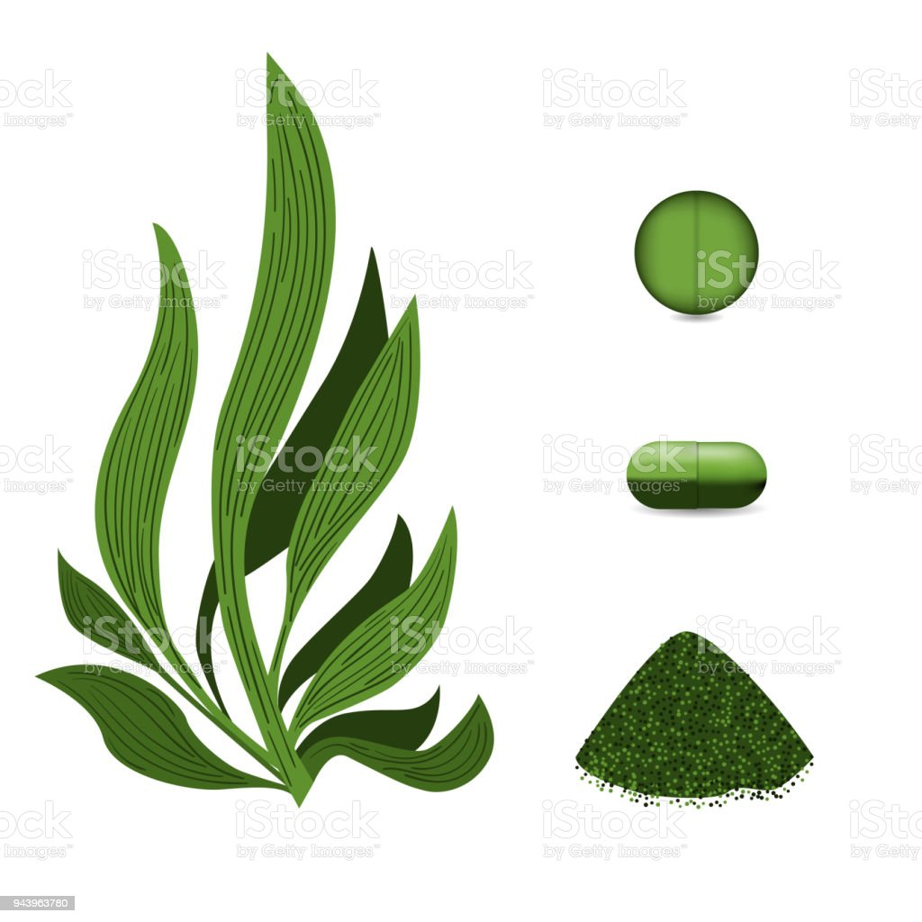 Pastillas de algas espirulina, espirulina en polvo. Comida vegetariana.  Vector ilustración de la planta. - ilustración de arte vectorial
