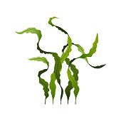 Spirulina seaweed healthy food, undersea algae isolated on white background, vector illustration.
