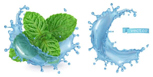스플래시 물과 박하입니다. 3d 현실 벡터 - vitamin d stock illustrations