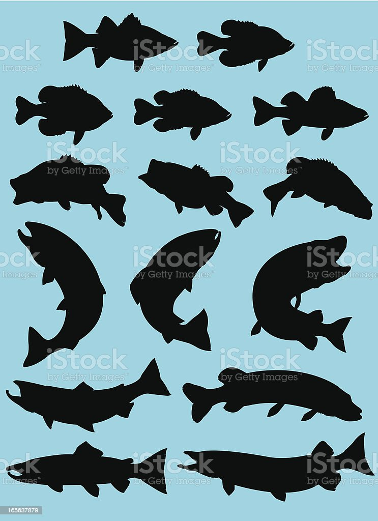 Sport Fish Silhouette vector art illustration