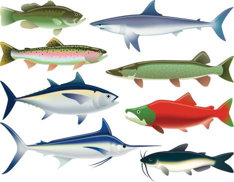 Sport Fish