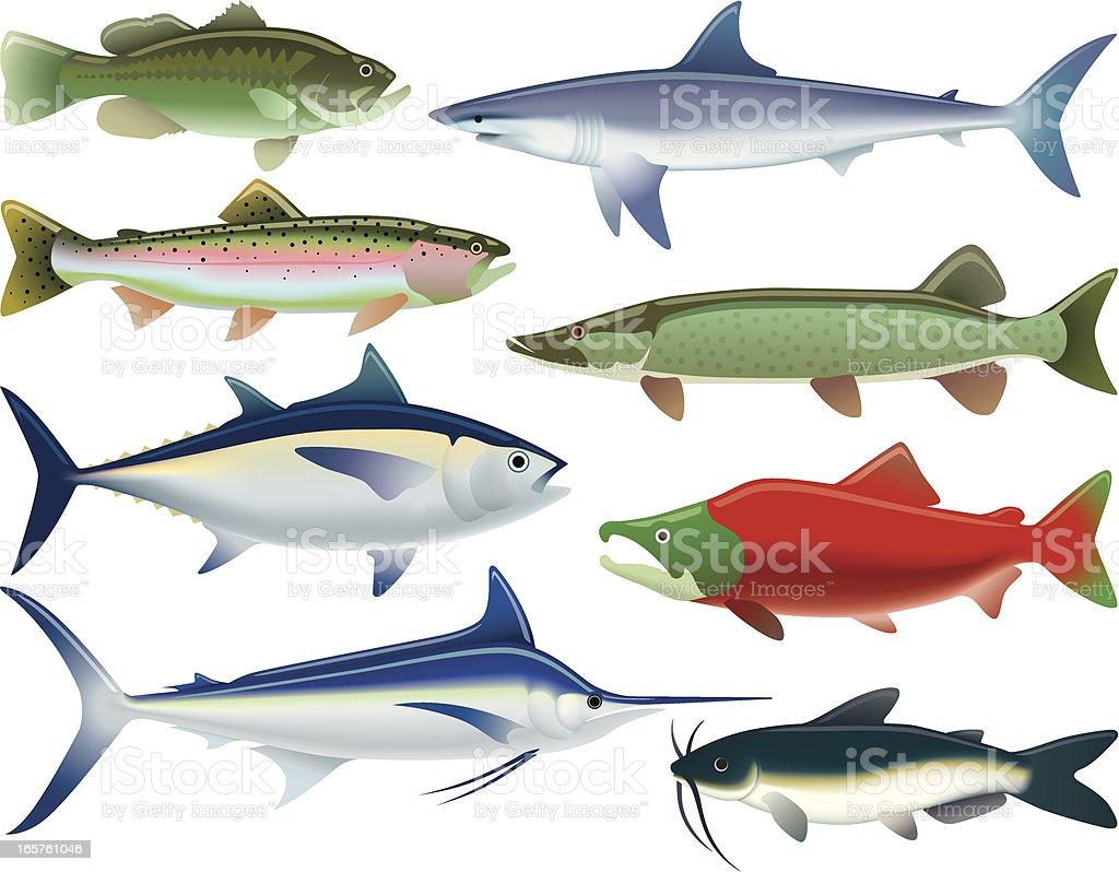 Sport Fish vector art illustration