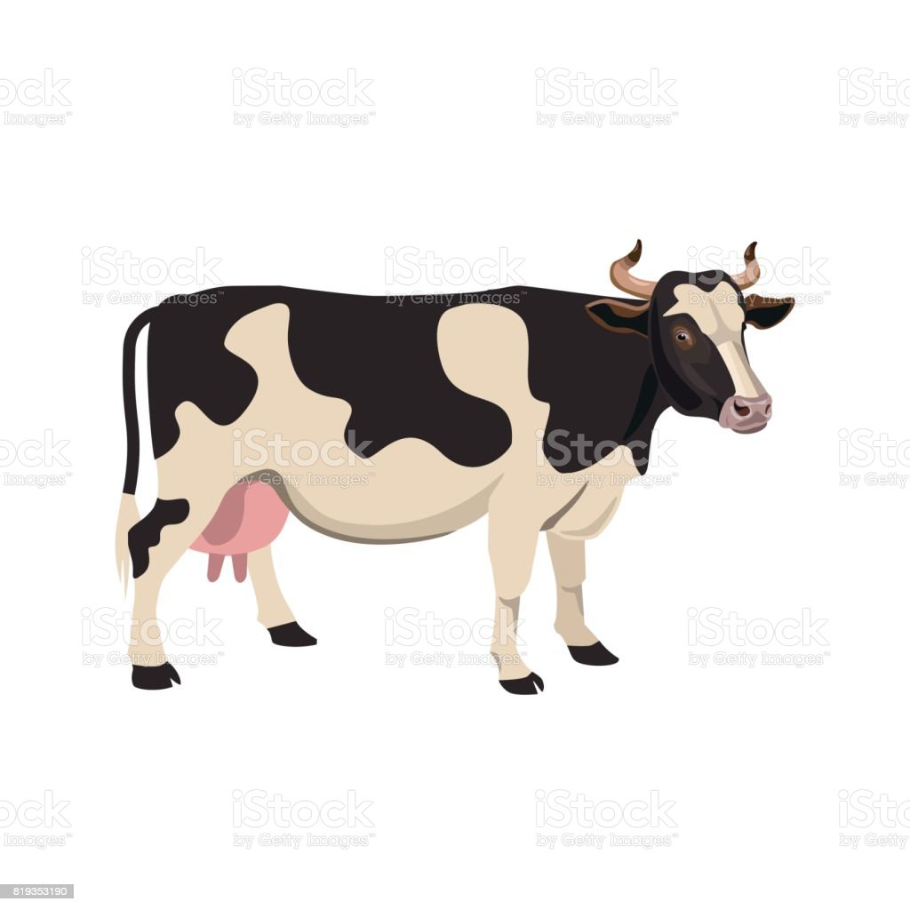 Spotted cow vector vector art illustration