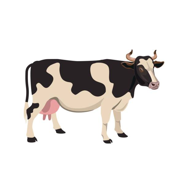 spotted cow vector - cow stock illustrations, clip art, cartoons, & icons