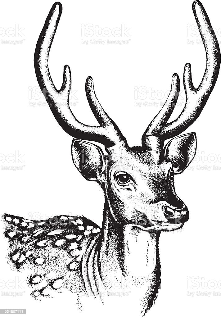 Cerf tacheté Illustration - Illustration vectorielle