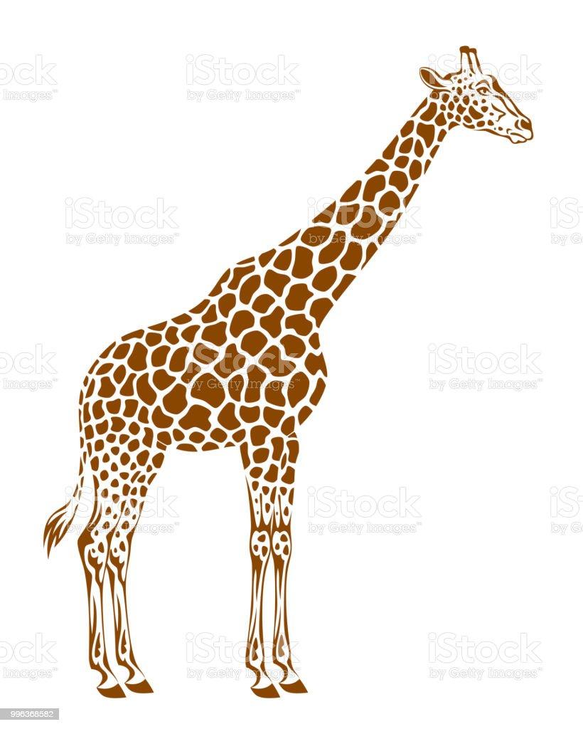 Spotted giraffe
