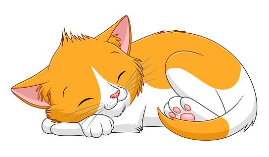 Spotted kitten sleeps