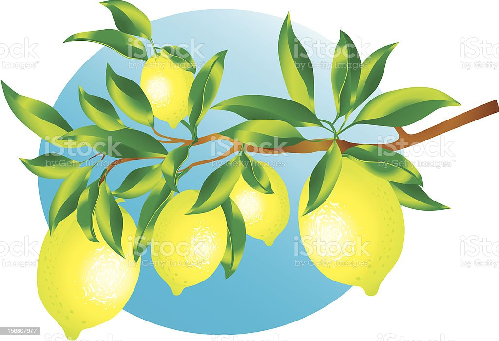 Sprig of lemons royalty-free sprig of lemons stock vector art & more images of citric acid
