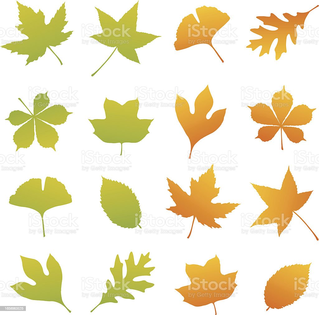 Spring and Fall Leaf Set royalty-free spring and fall leaf set stock vector art & more images of autumn