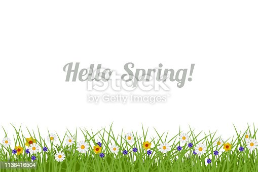 Spring and Summer background. Illustration with green grass and flowers