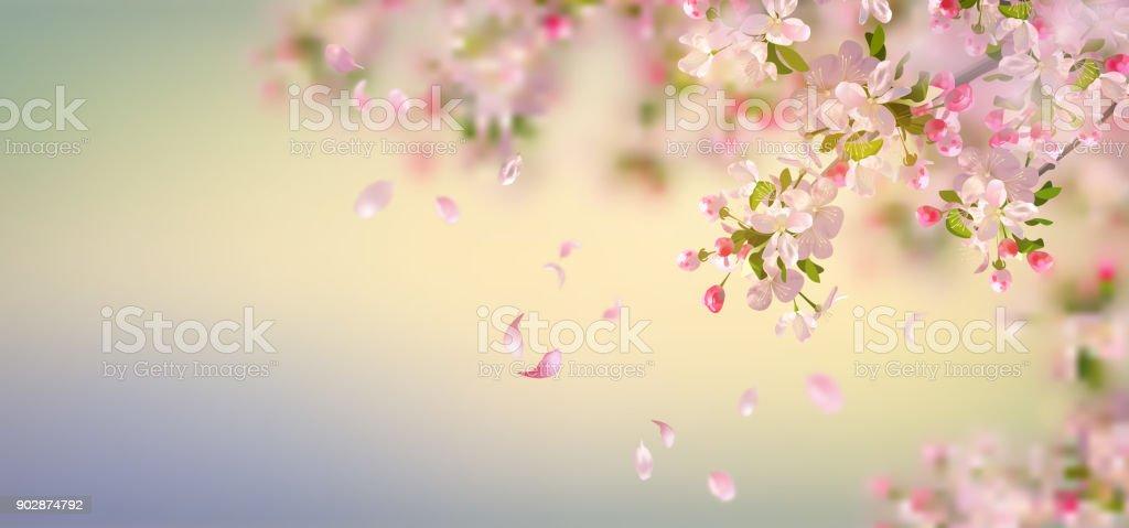 Spring Apple Blossom - Royalty-free Apple Tree stock vector