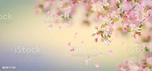Spring Apple Blossom Stock Illustration - Download Image Now