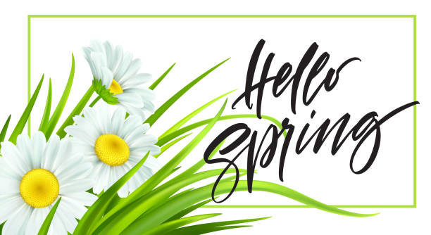 Spring background with daisies and fresh green grass. Hello Spring handwriting Lettering. Vector illustration Spring background with daisies and fresh green grass. Hello Spring handwriting Lettering. Vector illustration EPS10 spring stock illustrations