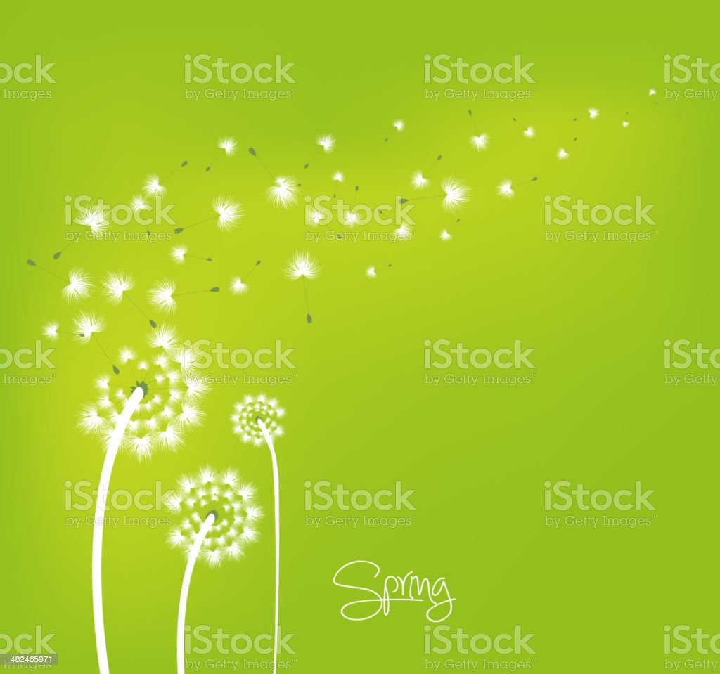 Spring background with dandelions vector art illustration