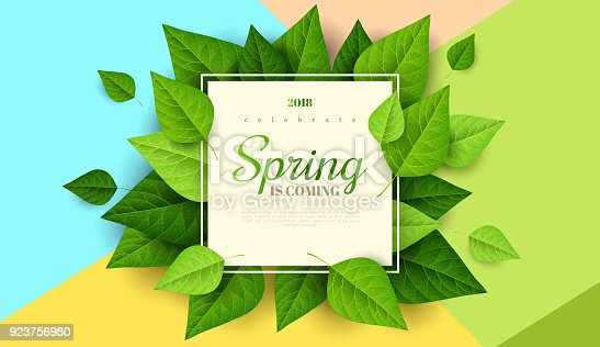 istock Spring background with green leaves 923756980