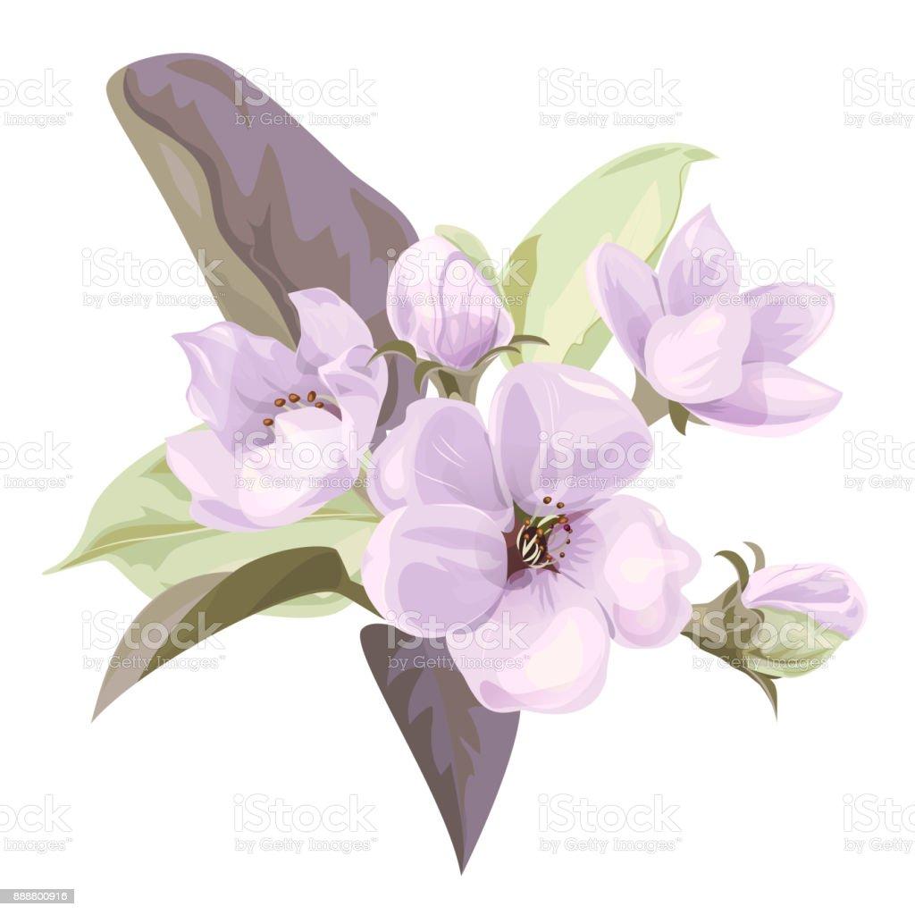 Fleur De Printemps Branche Avec Mauve Fleurs De Pommier Fleuron De