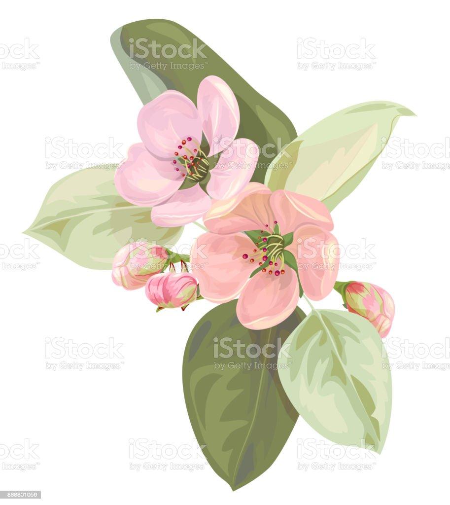 Fleur De Printemps Branche Avec Apple Rose Arbre Fleurs En Gros Plan