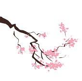 Spring blossom cherry tree branch