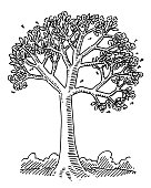 Spring Blossom Tree Nature Drawing