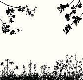 Silhouettes of variable spring plants