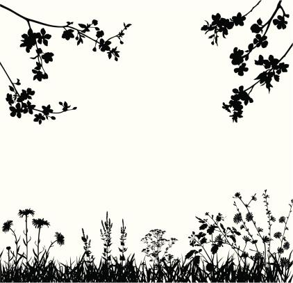 Spring blossomed garden