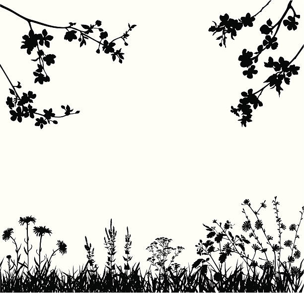 Spring blossomed garden Silhouettes of variable spring plants  apple blossom stock illustrations