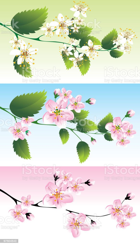 Spring branch royalty-free spring branch stock vector art & more images of backgrounds