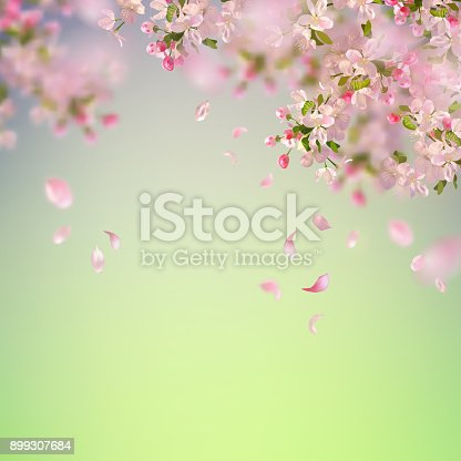 Vector background with spring cherry blossom. Sakura branch in springtime with falling petals