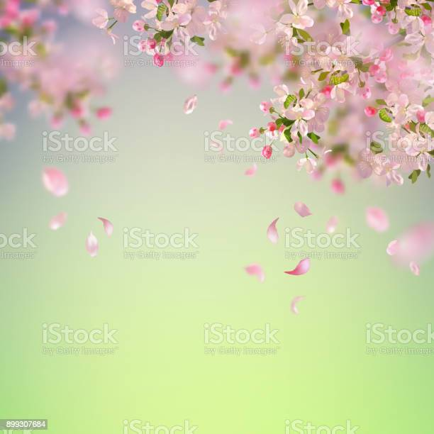 Spring cherry blossom vector id899307684?b=1&k=6&m=899307684&s=612x612&h=4g1vcoze1khxwtkg4x3oryfweqlvboedbl8rtep5cuq=