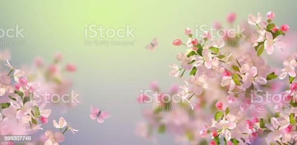 Spring cherry blossom vector id899307746?b=1&k=6&m=899307746&s=612x612&h=w1juycks3kz00a0apjzh7ugzhgkssxlcjkokyk5v1uo=