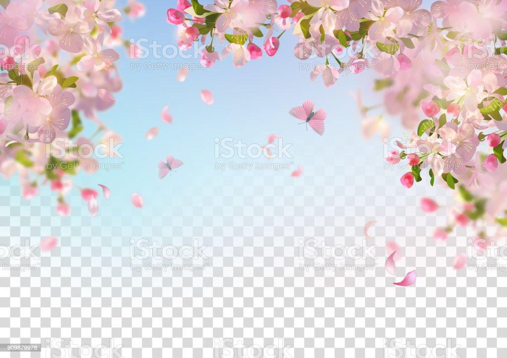 Lente kersenbloesem - Royalty-free Achtergrond - Thema vectorkunst
