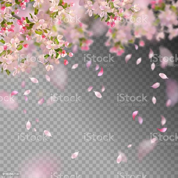 Spring cherry blossom vector id916056714?b=1&k=6&m=916056714&s=612x612&h=lww43jq4bnnme hafds4kcs wzpywitm5jrc0jeftcu=